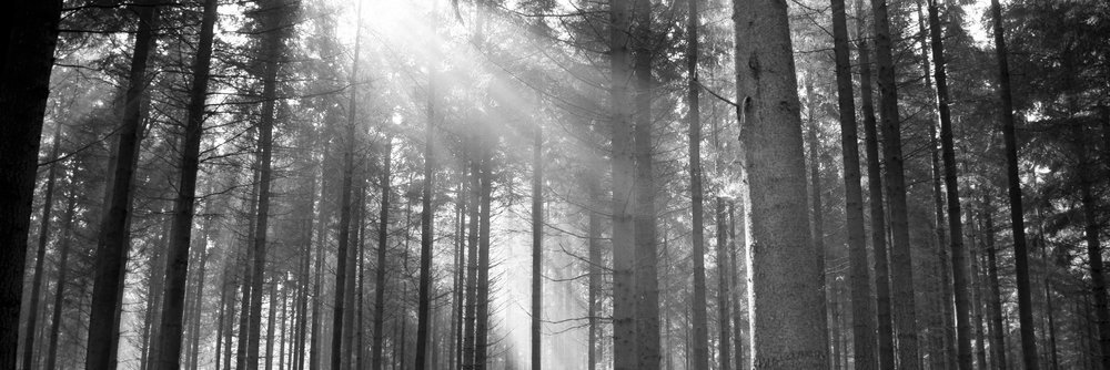 forest-sun-pictures-33427-34184-hd-wallpapers.jpg