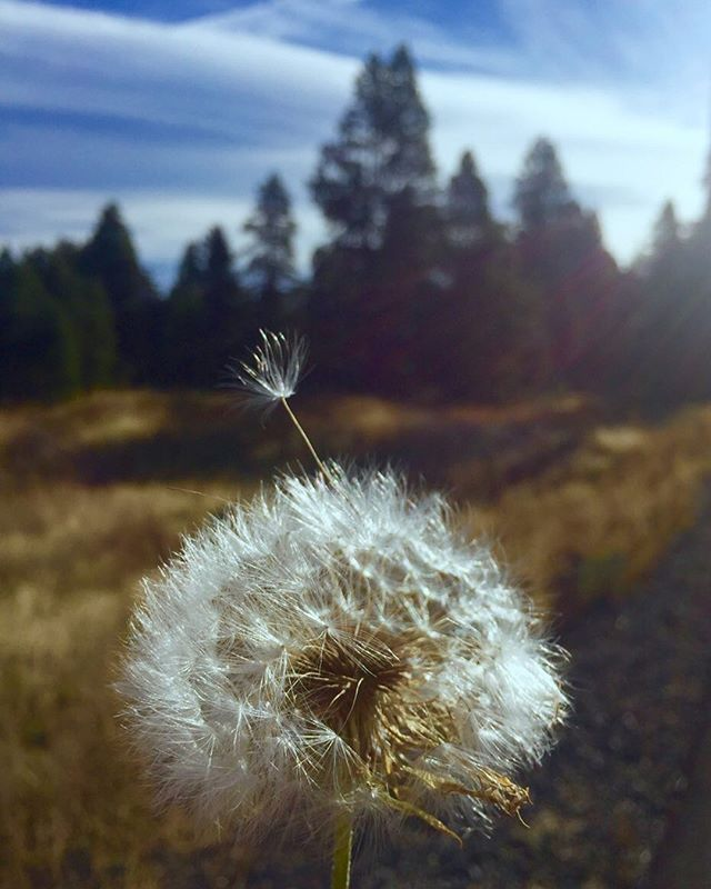 Make a wish.  #forgive#life#hurtheart#mountain#wishfulthinking#chasingdreams