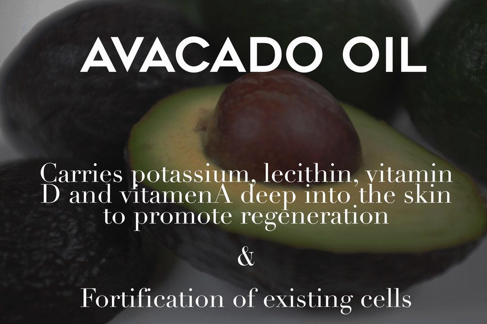 avocado web photo.jpg