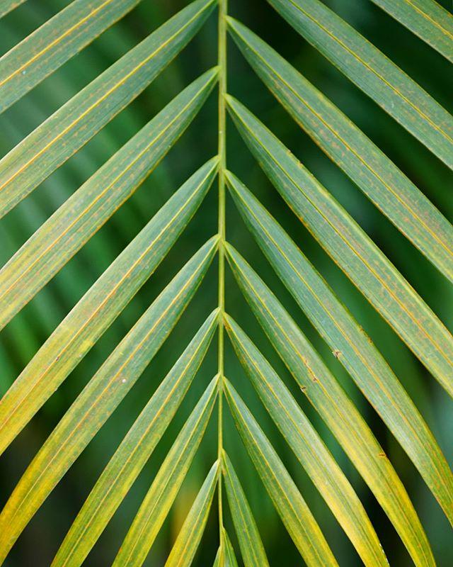 When in the tropics....🌴🌺