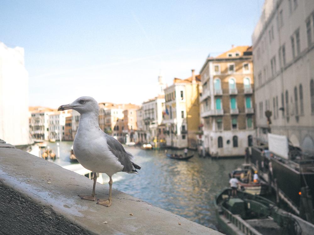 201509_Italy-295.jpg