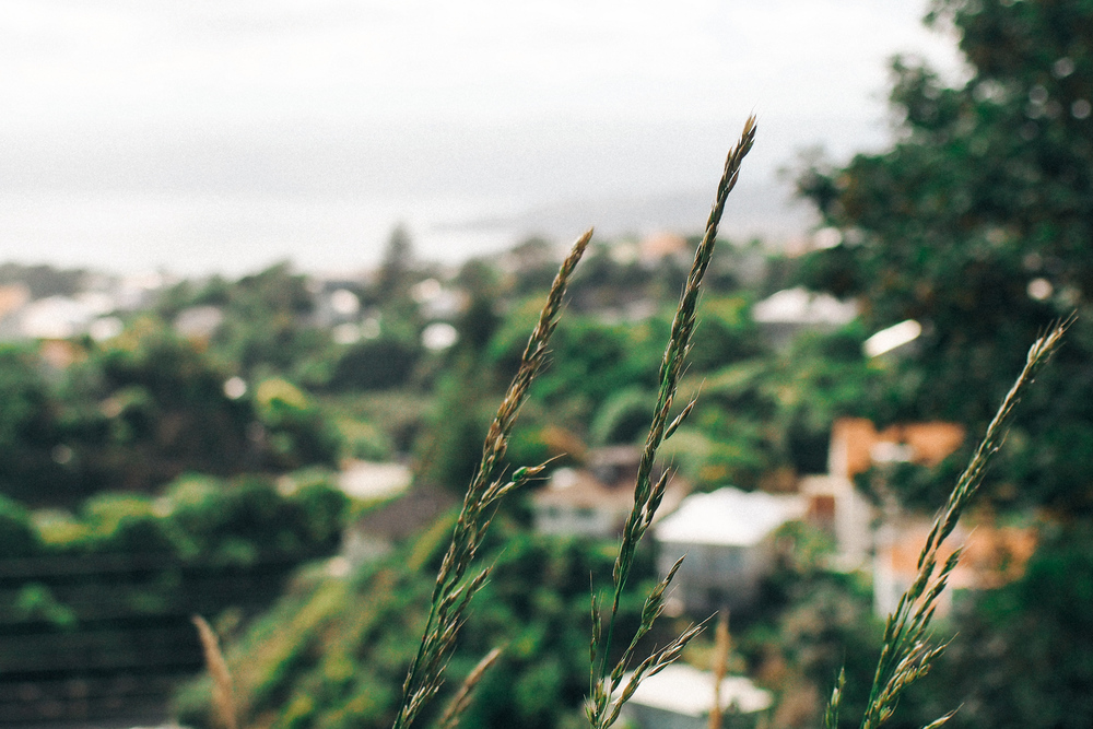 201502_Wellington-096.jpg