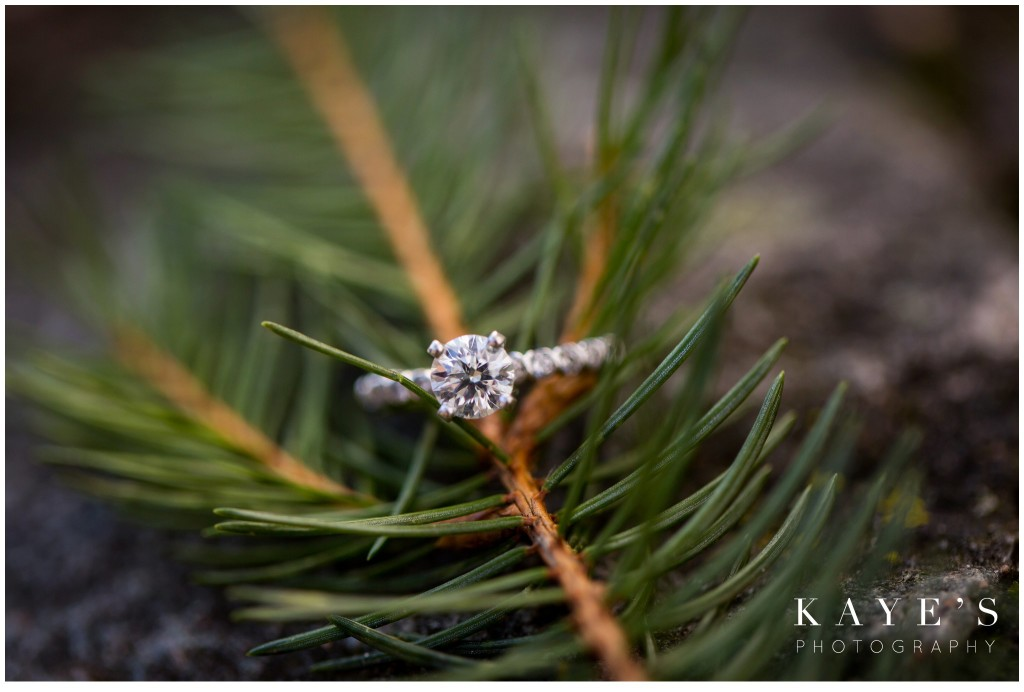 ring in tree, pretty ring, pine tree ring