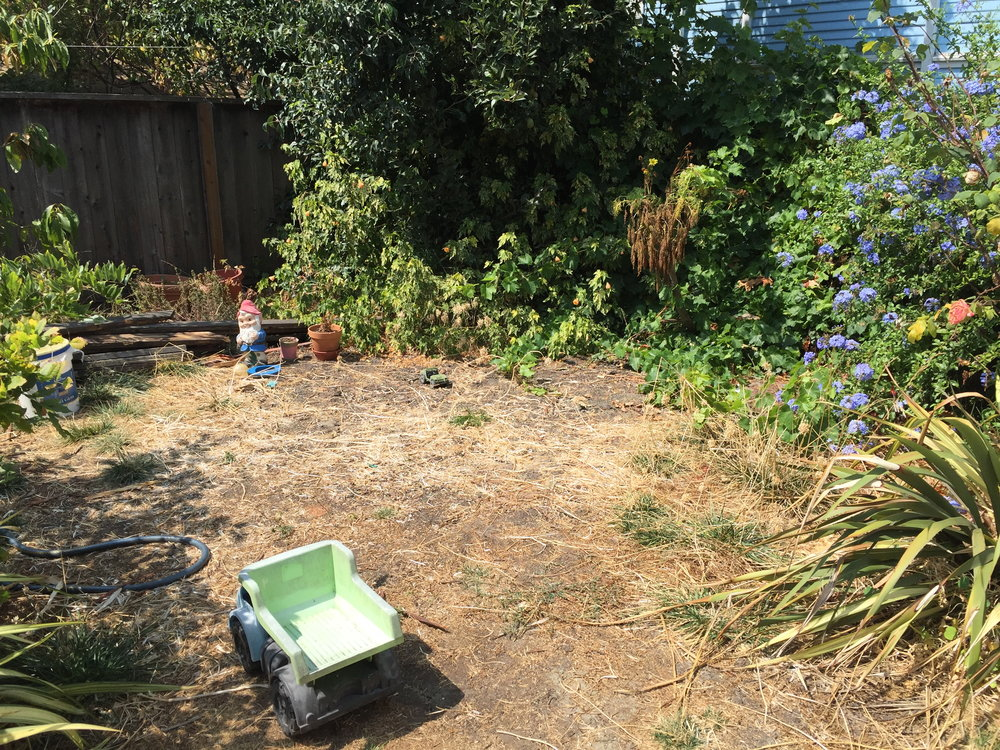Backyard Pre-conversion - The yard had been neglected for quite a while and consisted of overgrown bushes, trees and dead grass. Clearing out the shrubbery and creating a clear to pallet to work on was the first step.