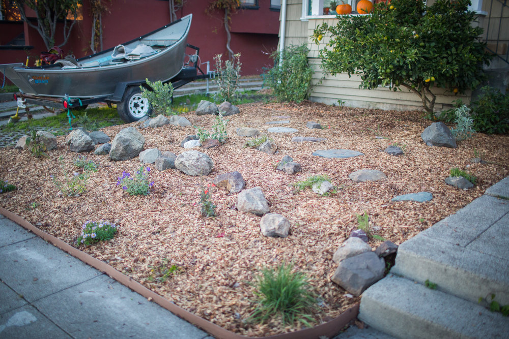 Berkeley Lawn Conversion - This landscape is made up of an array of drought-tolerant native plants and a fruit tree. We used rocks found on-site to create pavers and accent the contours of the yard. Note the picture below to see how the lawn looked previously.