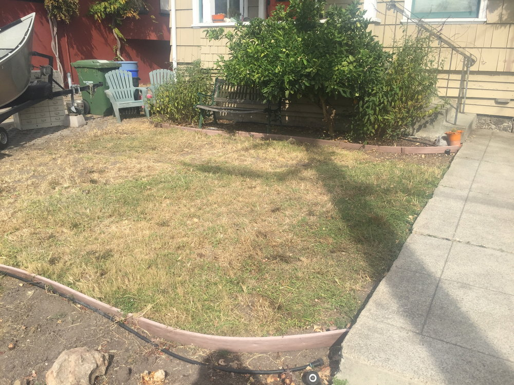 Pre-conversion - This lawn had gone without irrigation for some time and was particularly dry and dead during the long summer months. This was the perfect canvas for a new landscape and also qualified for a water conservation rebate through a state program.