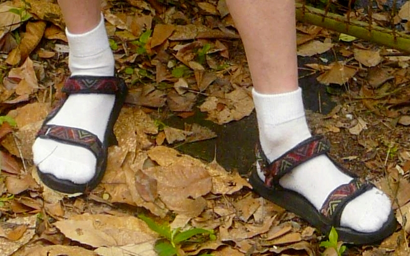 Socks and Sandals   - weird, or just plain wrong?                                              Photograph: Wikipedia