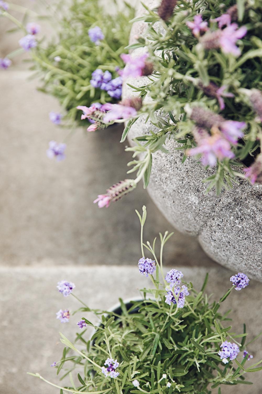 Lovely Lavender AMU Foto Emily Dahl-1.jpg