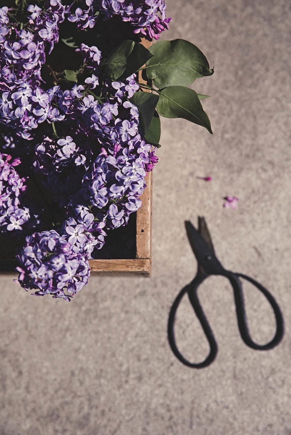 Lilac Hacks Foto Emily Dahl-3.jpg
