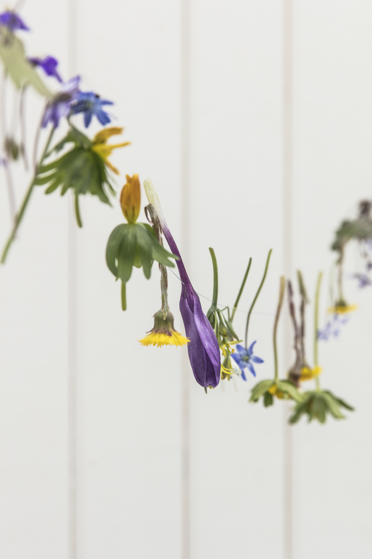 blommor232A5200.jpg
