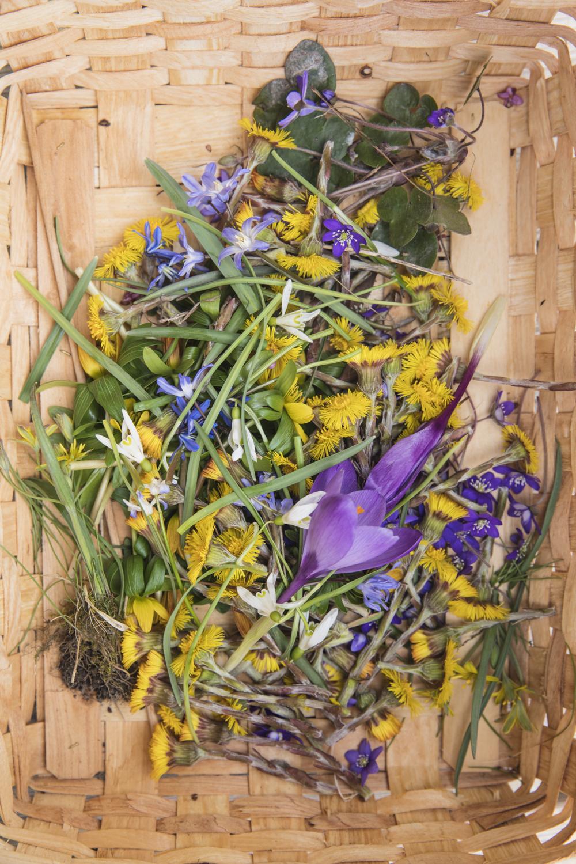 blommor232A5186.jpg