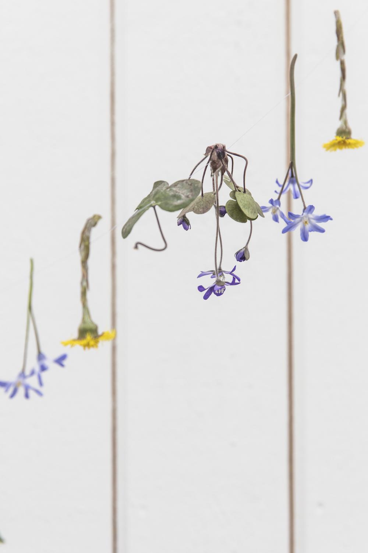 blommor232A5195.jpg