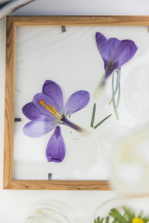 blommor232A5269.jpg