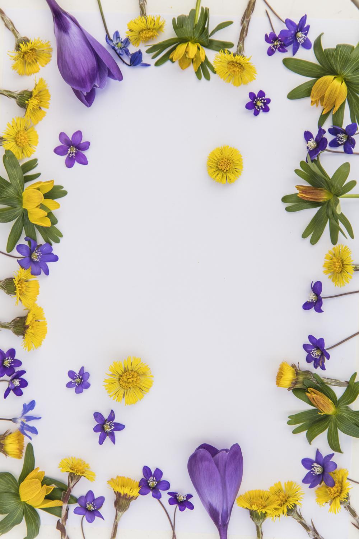 blommor232A5293.jpg
