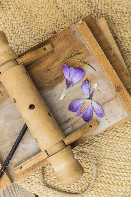blommor232A5337.jpg