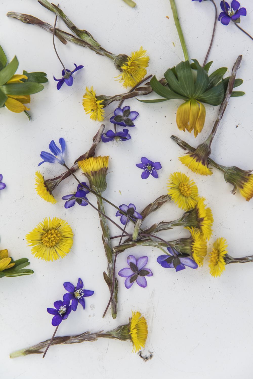 blommor232A5302.jpg