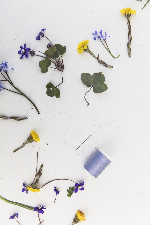 blommor232A5326.jpg