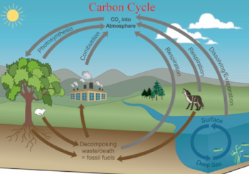 The Carbon Cycle Photo credit: http://cahsbiology.weebly.com/the-carbon-cycle.html
