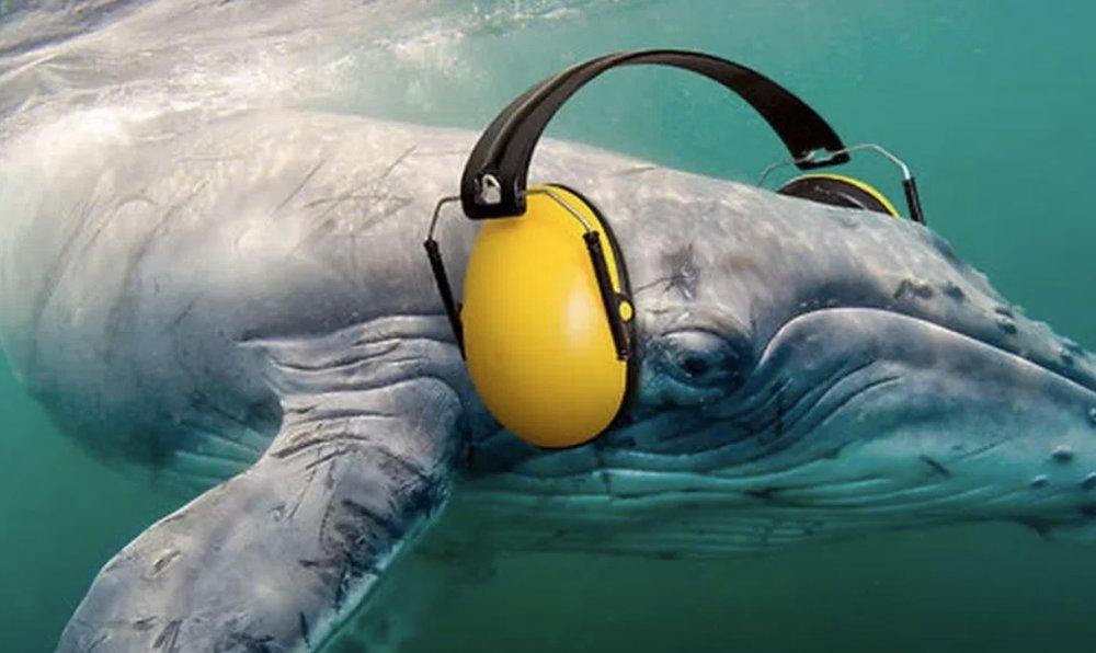 playlist guardiãs do mar | vevo - CLIQUE AQUI para celebrar a vida e o poder de transformação da natureza...
