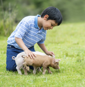 cropped-Boy-playing-with-piglets-000041480300_Large.jpg
