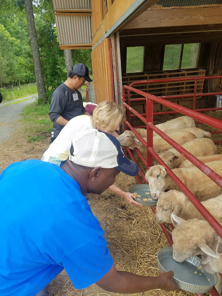 Seminar participants feeding sheep at Piedmont Farm Animal Refuge. Photo by Christopher Carter