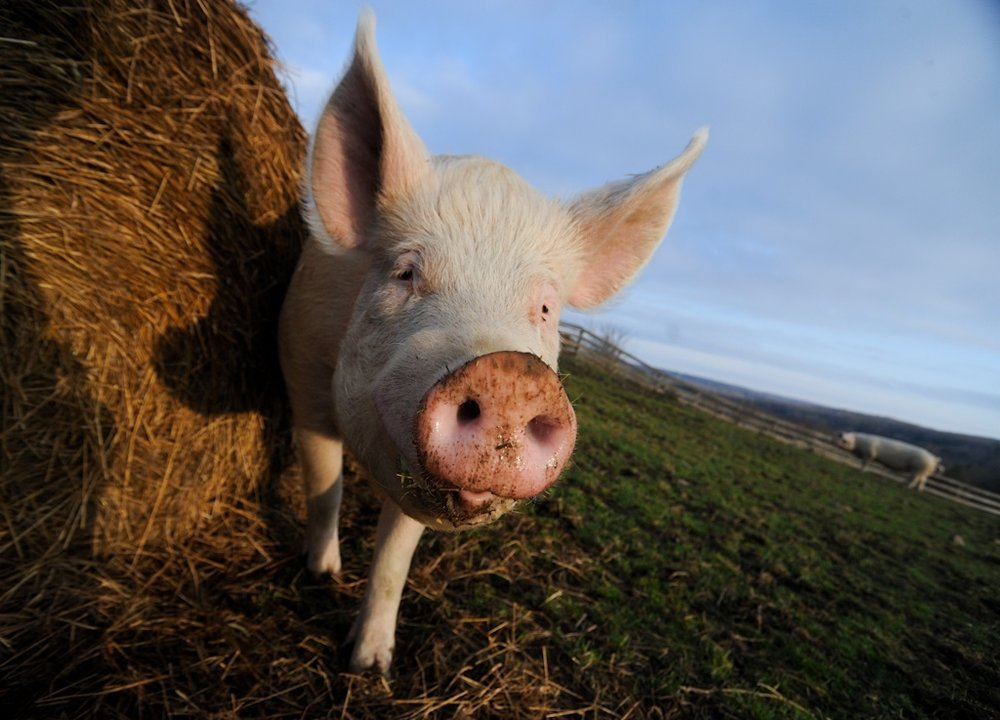 Sprinkles | Photo by Jo-Anne McArthur | We Animals