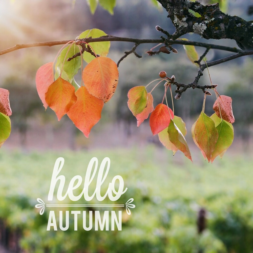 Hello Autumn - Lady by the Bay