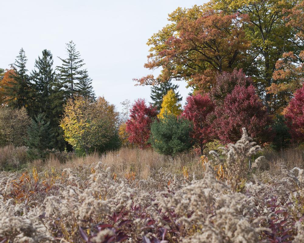 colorful trees copy.jpg