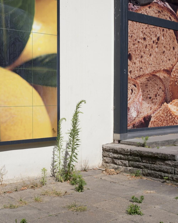 bread and lemons wall copy.jpg
