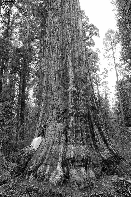 Photo of Meg with giant sequoia, Calaveras Big Trees State Park, Copyright 2013  Jack Gescheidt