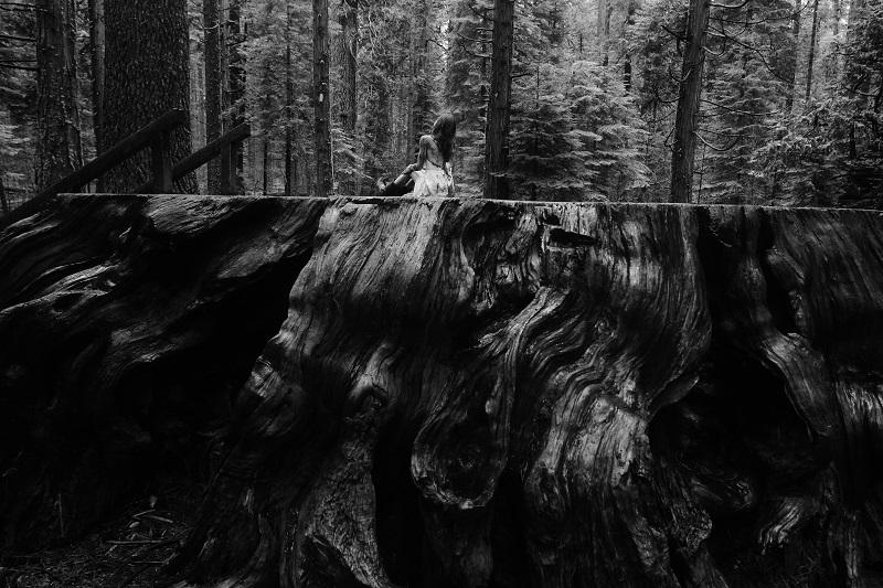 'Discovery Tree' - giant sequoia Calaveras Big Trees State Park, and Meg / Photo Copyright 2013 Jack Gescheidt /  Wildfire: a love story