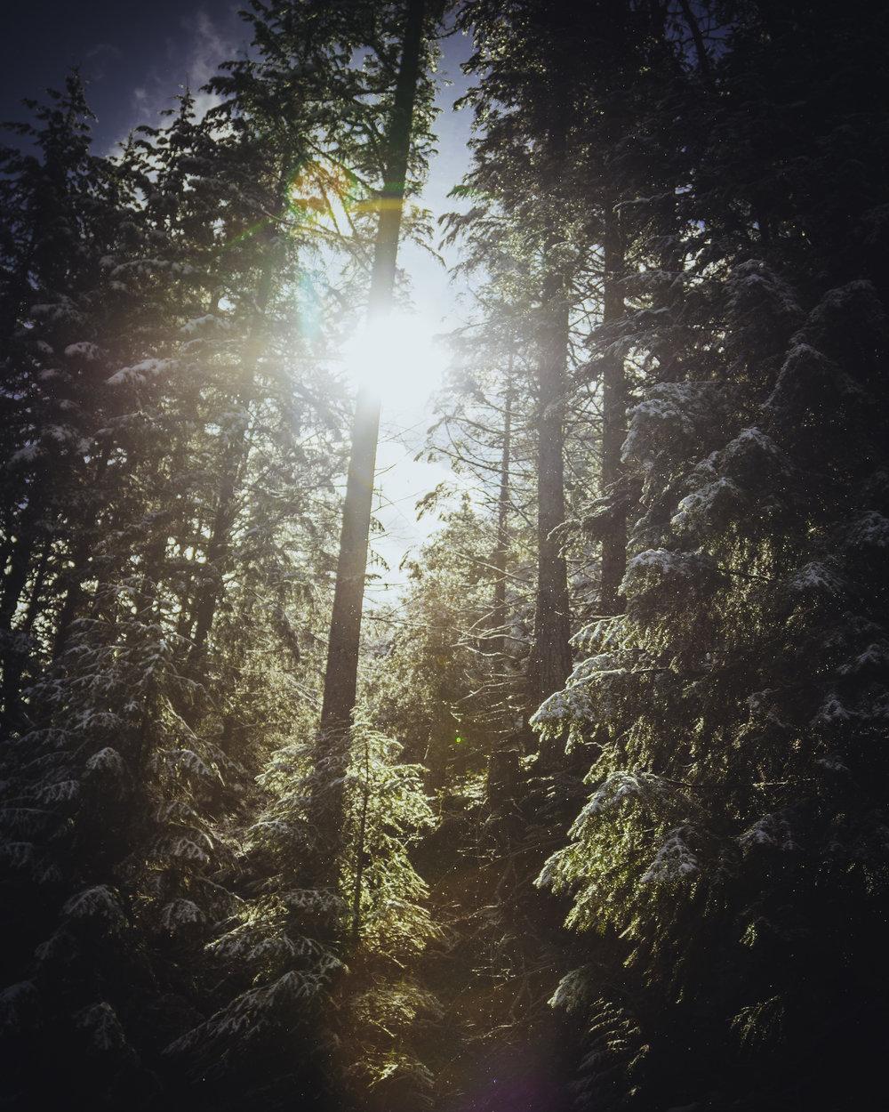 Treesx2.jpg