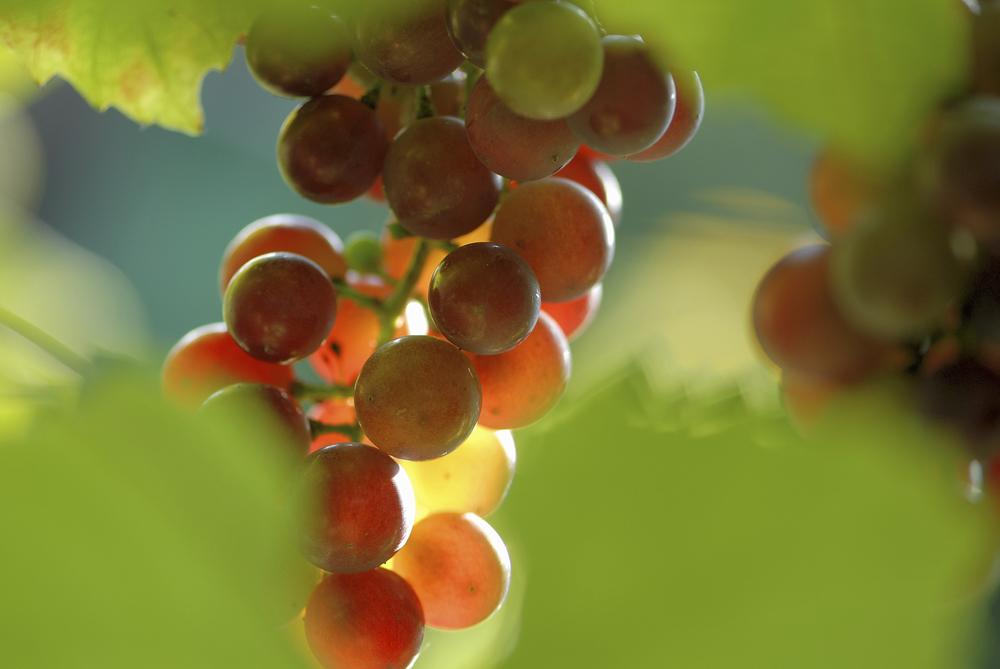 Antioxidants     (read more)