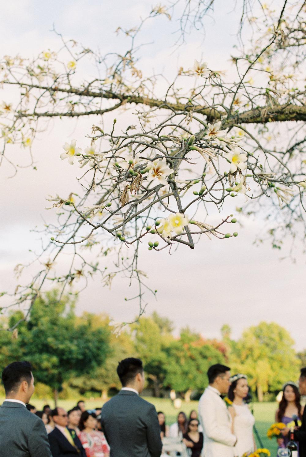 los-angeles-county-arboretum-and-botanic-garden-wedding-photos-photography408.jpg