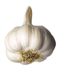 white garlic ne.jpg