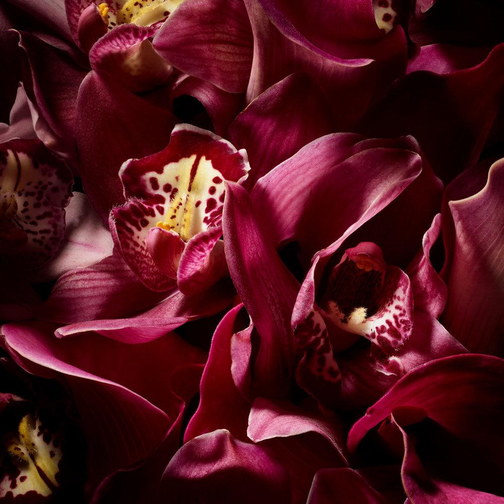 HolyYoni_Flowers_B_Editorial_39662rt2.jpg