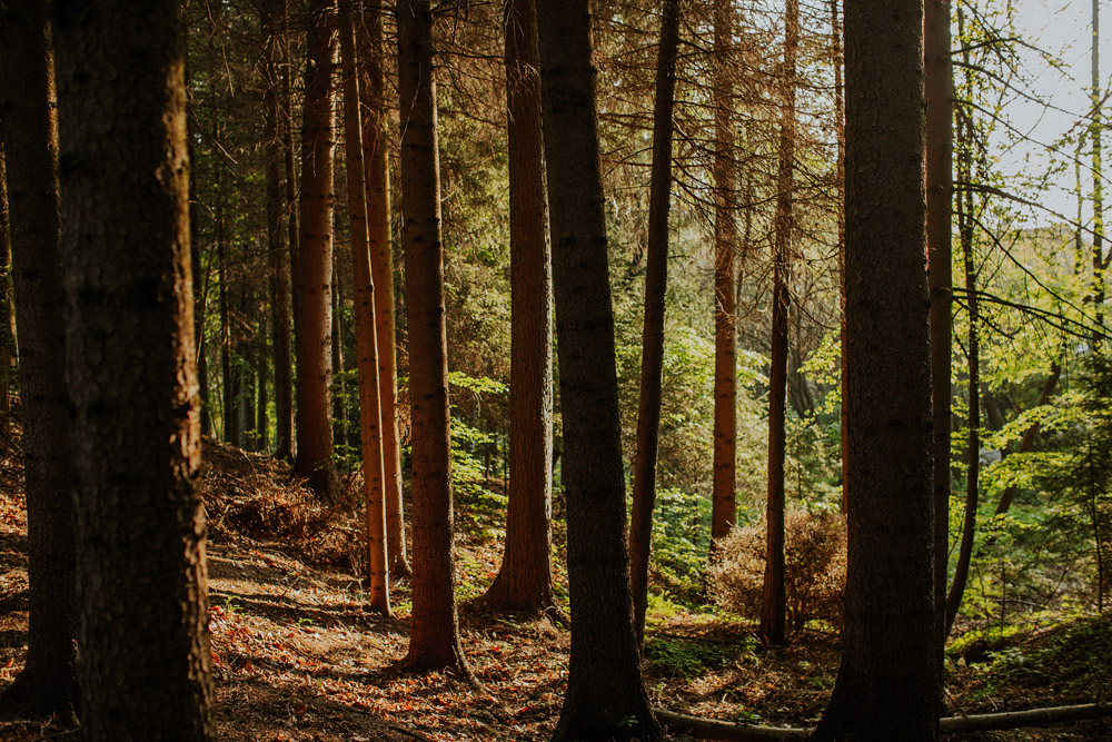 pinewoodlifestyle_spring00015.jpg