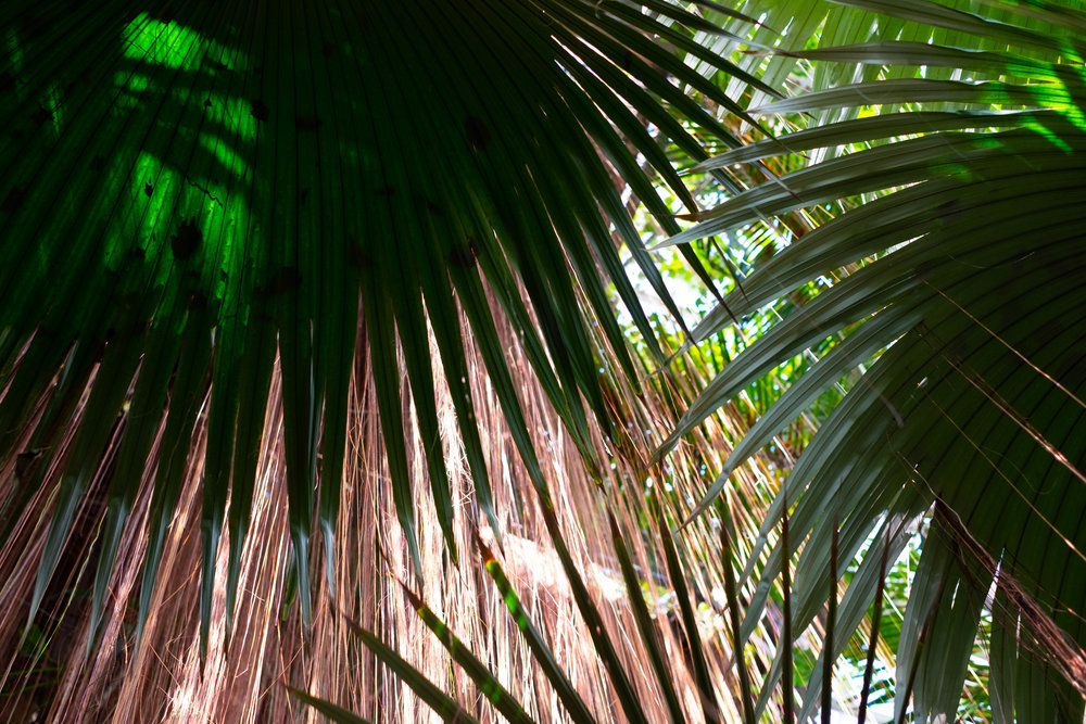 atlanta botanical gardens  | Jakee Zaccor | Jacqueline Zaccor | JZaccor Designs