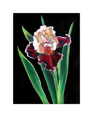 Burgundy-Iris-SS-web-B.jpg