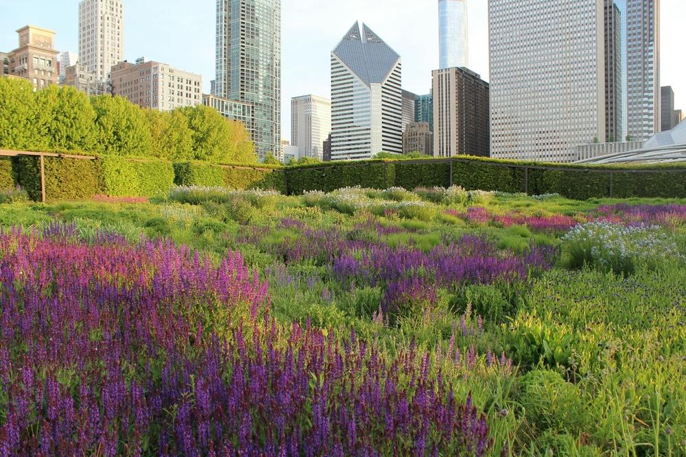 Garden in Millenium Park