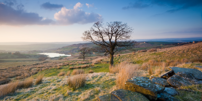 Yorkshire-Dales-Moorland-Scene-000027014239_Large.png