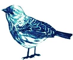 new bird.jpg