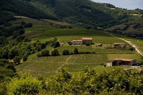 The beautiful & picturesque Beaujolais wine country