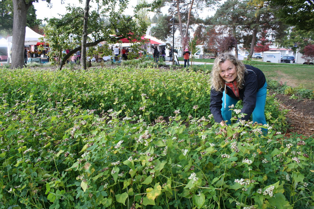 Committee member Felicia getting up close and personal with the buckwheat cover crop.