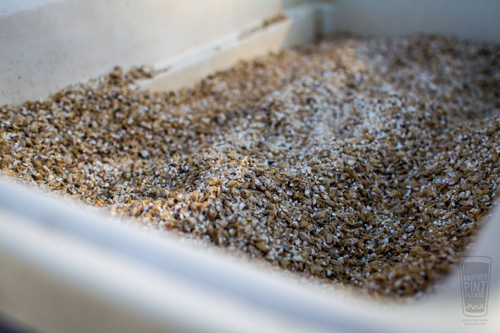 Grain bed in mashtun.jpg