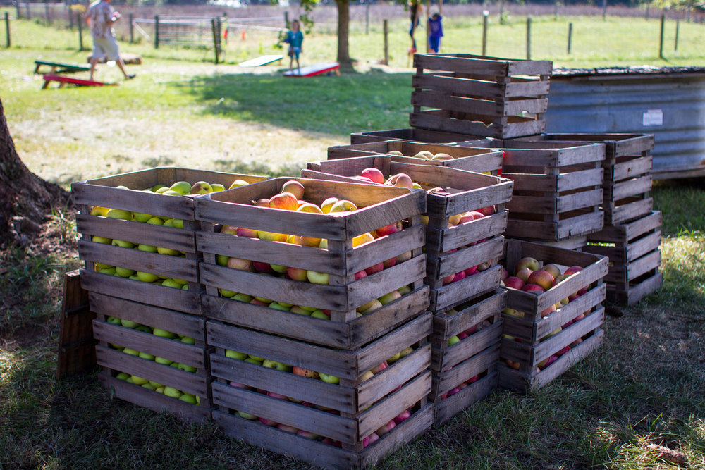 crates of apples at aullwood farm.jpg