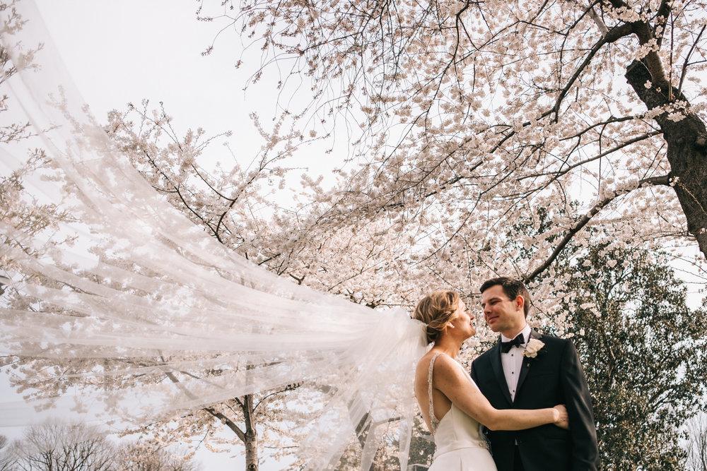 Cherry Blossoms Wedding Bride Veil Portrait
