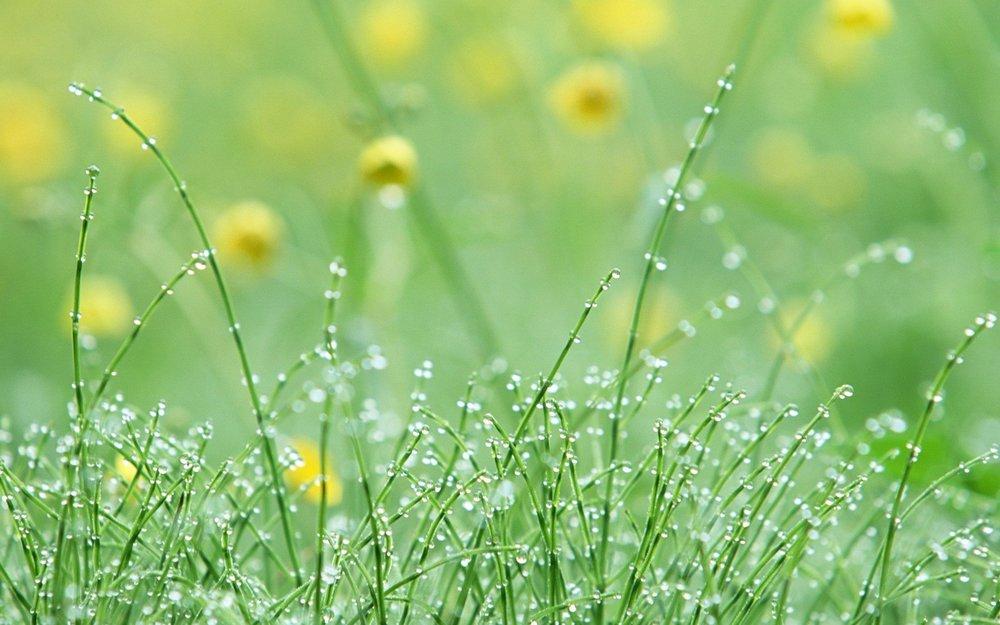 dew-drops.jpg