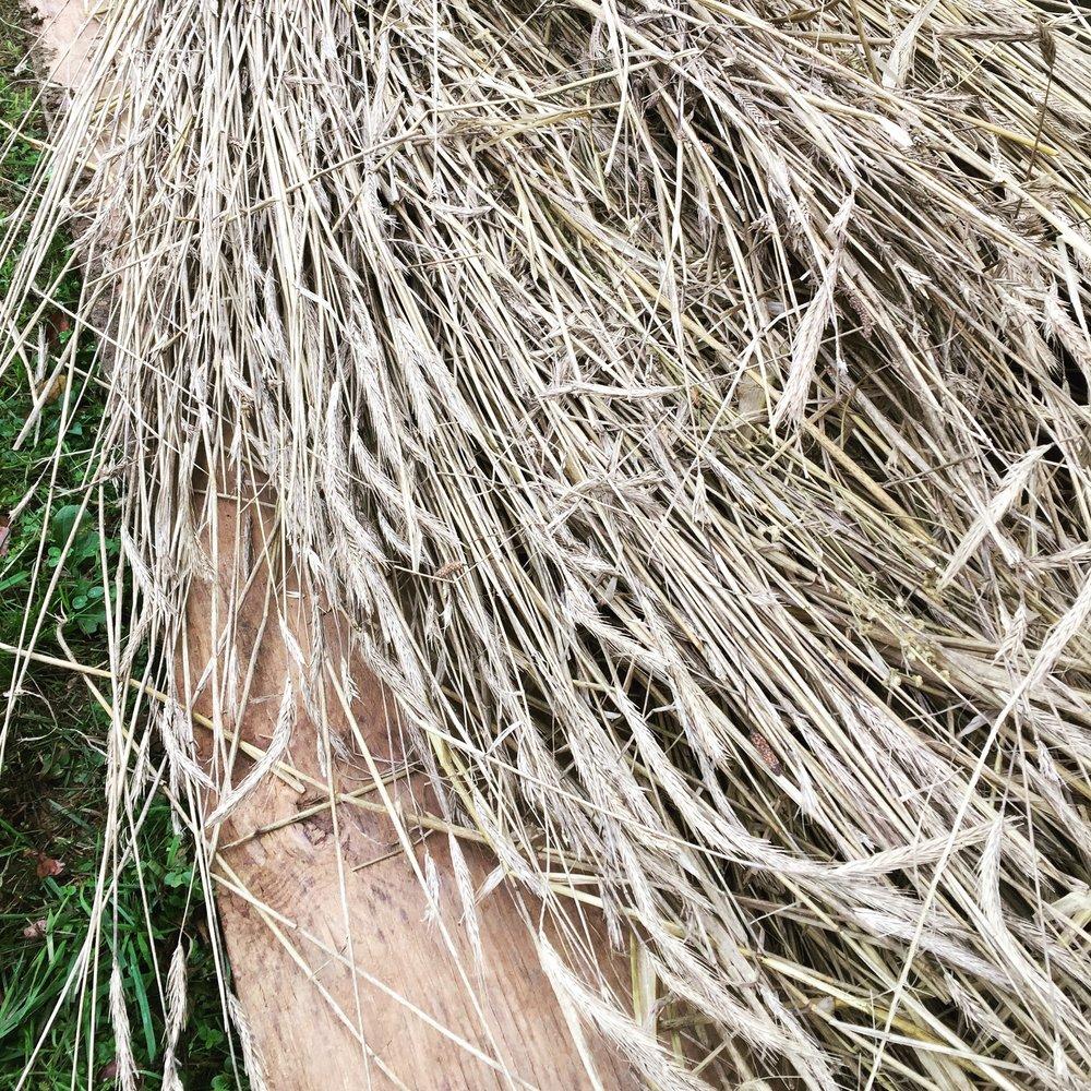biodynamic rye straw