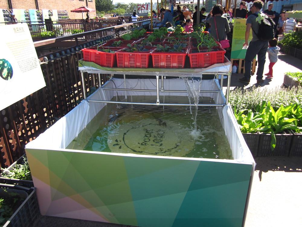 Aquaponics Station